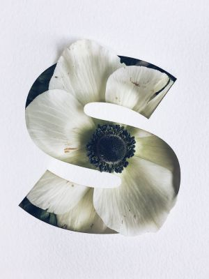 Stunning Flower Typography Project by Julia Losfelt