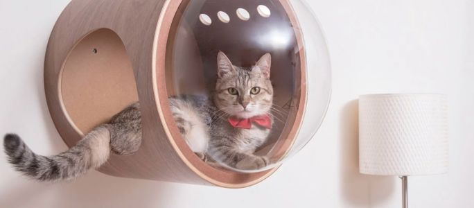 Spaceship Inspired Beds for Cats