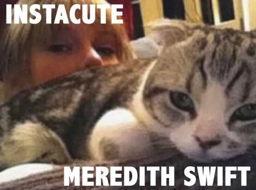 Meredith:  Le chat super star de Taylor Swift !