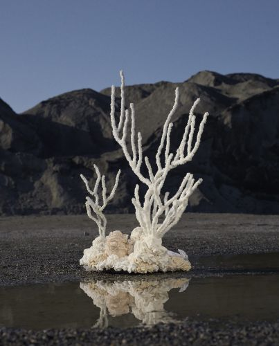 Exploring Corals' Beauty with Aude Bourgine